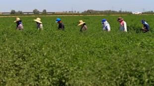 167215_me-farmworkers_RRD_